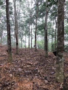 Ejen Tanah Jelebu Kuala Klawang 3 Ekar Guruhartanah.my